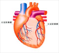 図4.冠動脈(ホームページ「糖尿病講座『流れて良くなる』」より)
